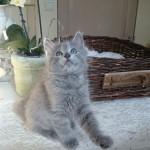 Lord Lianthorn als kitten